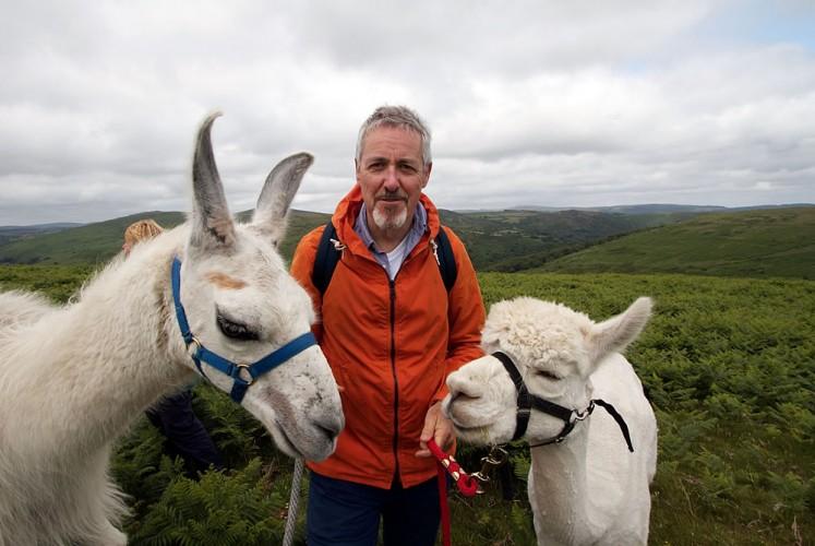 Griff Rhys Jones With Dartmoor Llamas