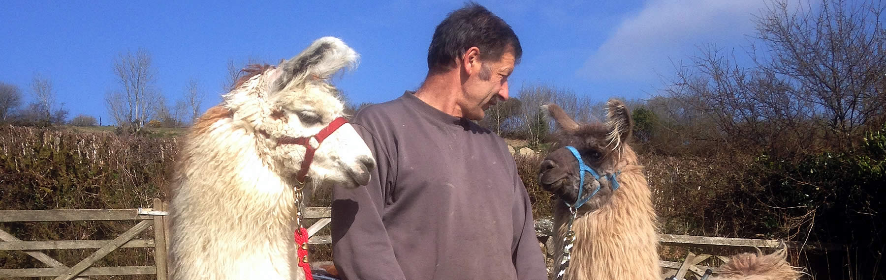 Newcott Farm Breeders of Llamas and Alpacas