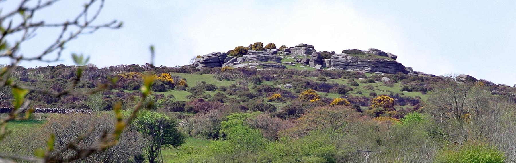 Views of Dartmoor Whem Llama Walking