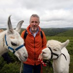 Griff Rhys Jones With Dartmoor Llamas