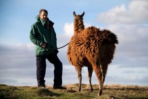 Llama on Lead