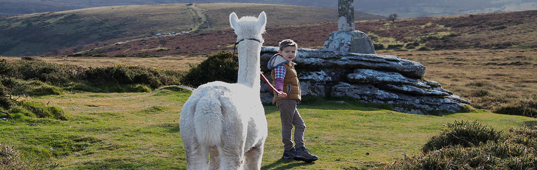 Family Llama Walks on Dartmoor Devon